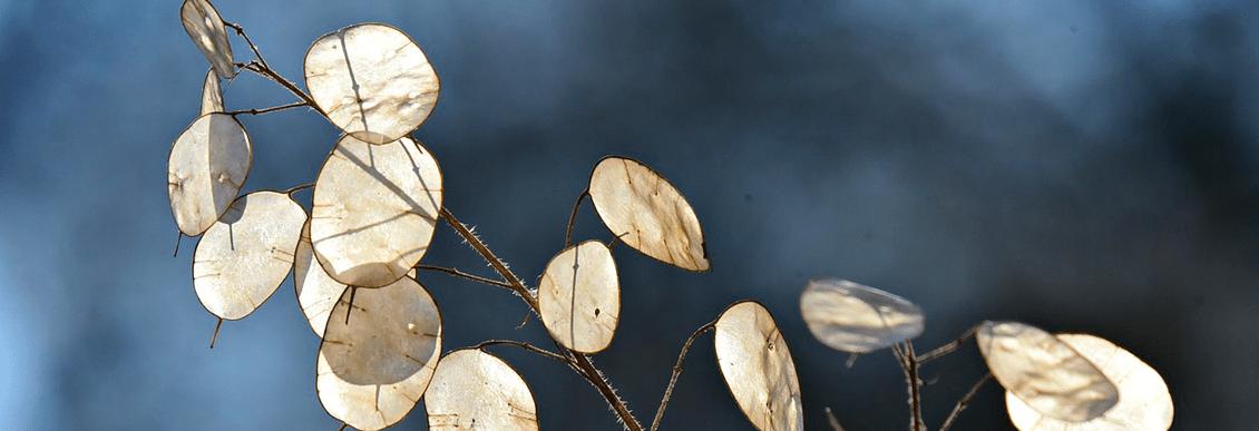 Covid-19 – Le Cabinet CLEACH reste à votre disposition